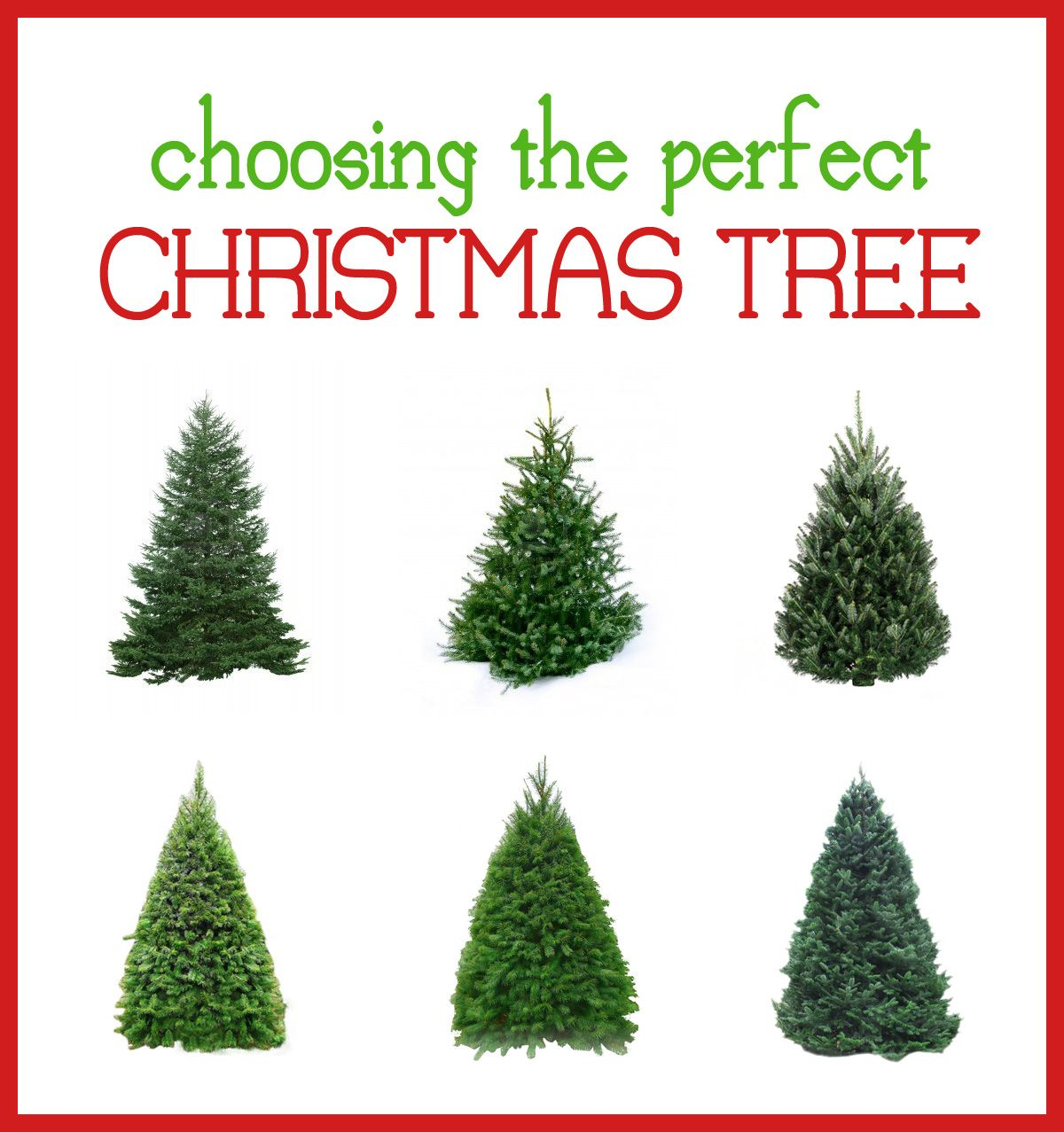 tips for choosing the perfect Christmas tree | November | Pinterest ...
