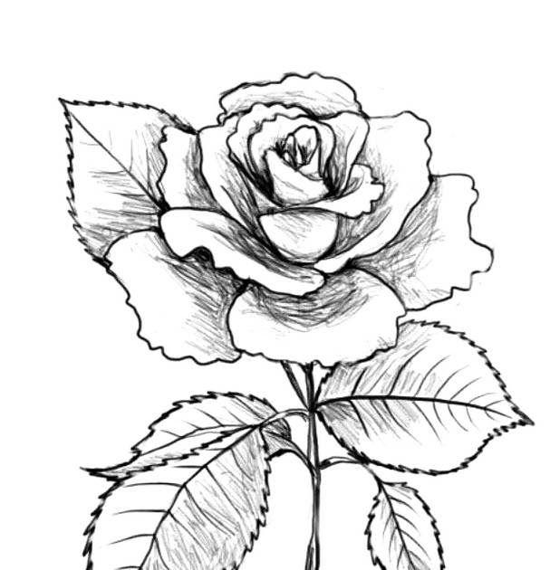10 Gambar Bunga Bagus Dan Mudah Digambar 300 Gambar Bunga Mawar Mudah Digambar Gratis Infobaru Download 3 Cara Untuk Menggambar Bunga M Di 2020 Bunga Gambar Mawar