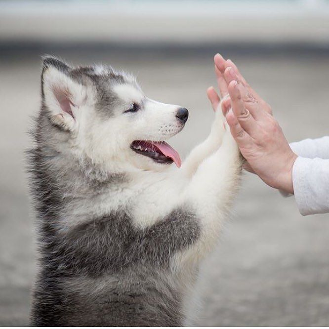 Because it's #nationalpuppyday and we would do anything to high five an adorable pup right about now. You too?  @aliciaivanze_