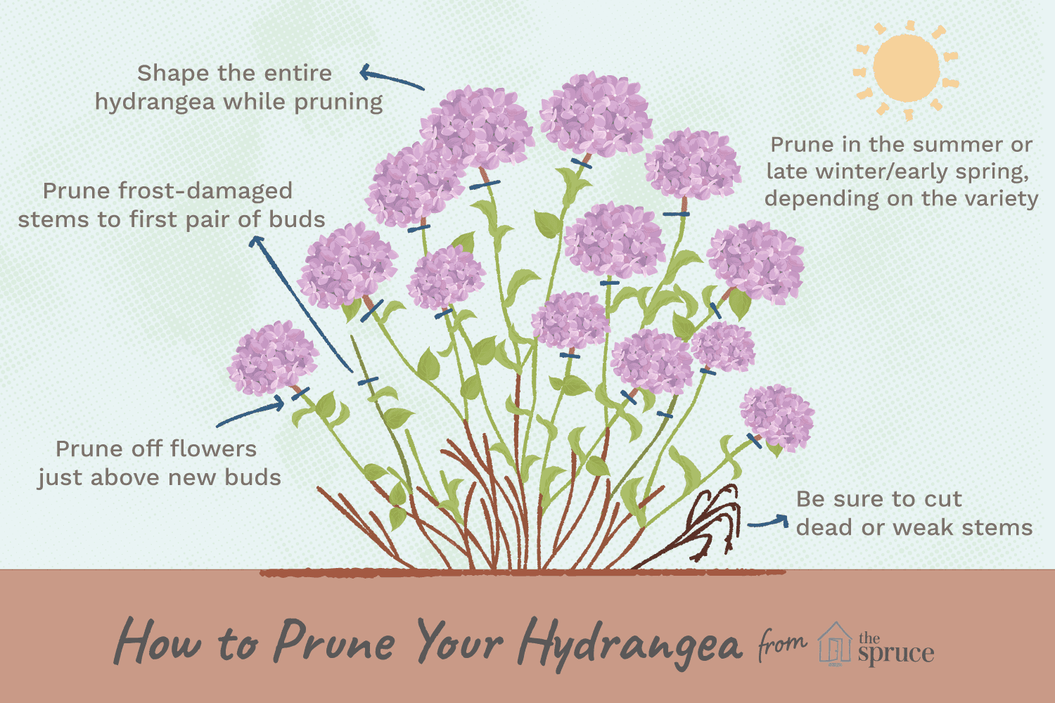 How To Prune Different Kinds Of Hydrangeas When To Prune Hydrangeas Hydrangea Care Hydrangea Potted