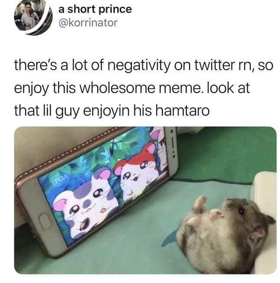 So Enjoy This Funny Memes Animal Memes Cute Animals