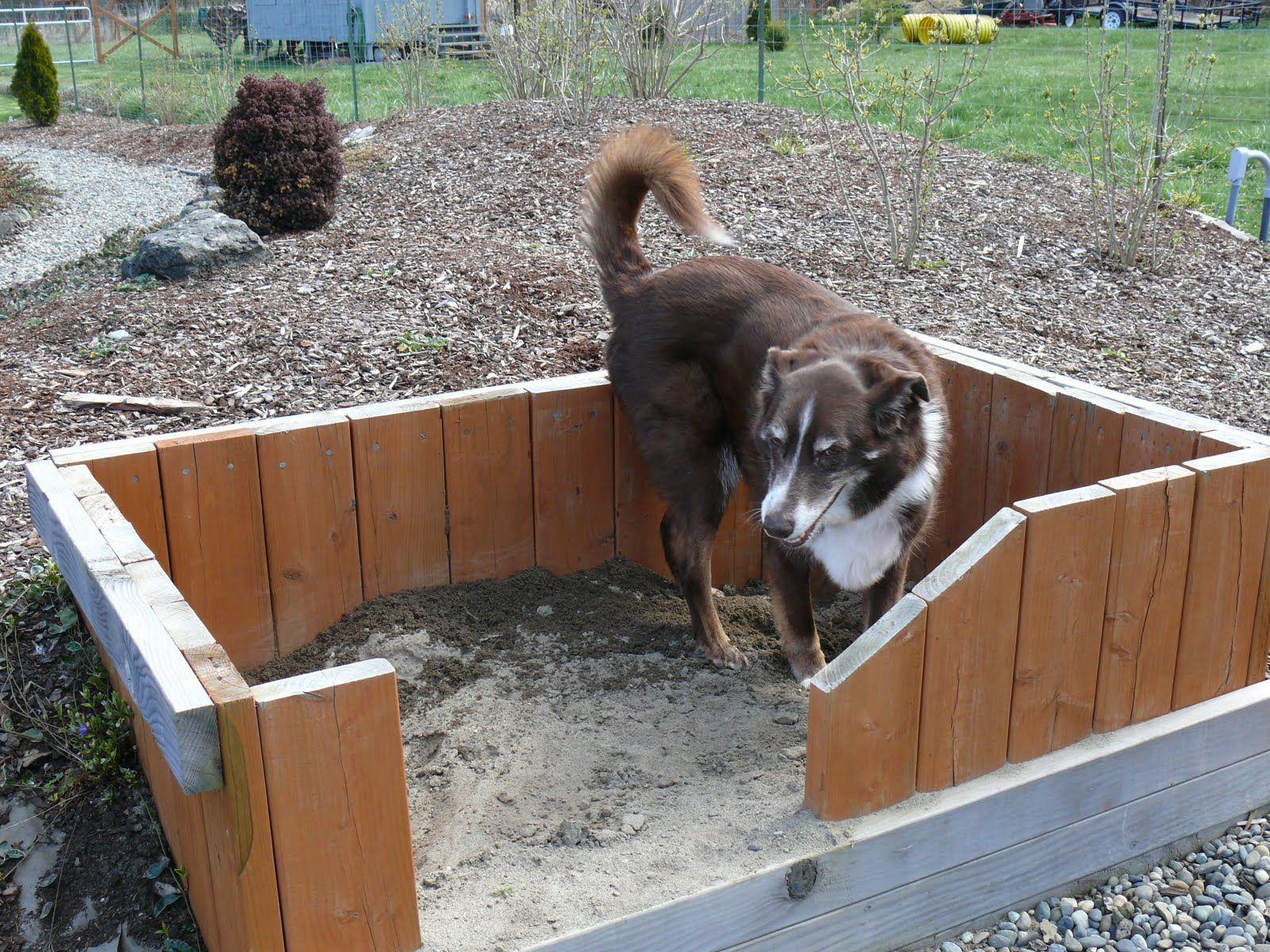 Create A Digging Pit For Dogs Created Out Of Leftover Decking Lumber Filled With Mix Sand And Dirt To Keep It Lose Well Drained