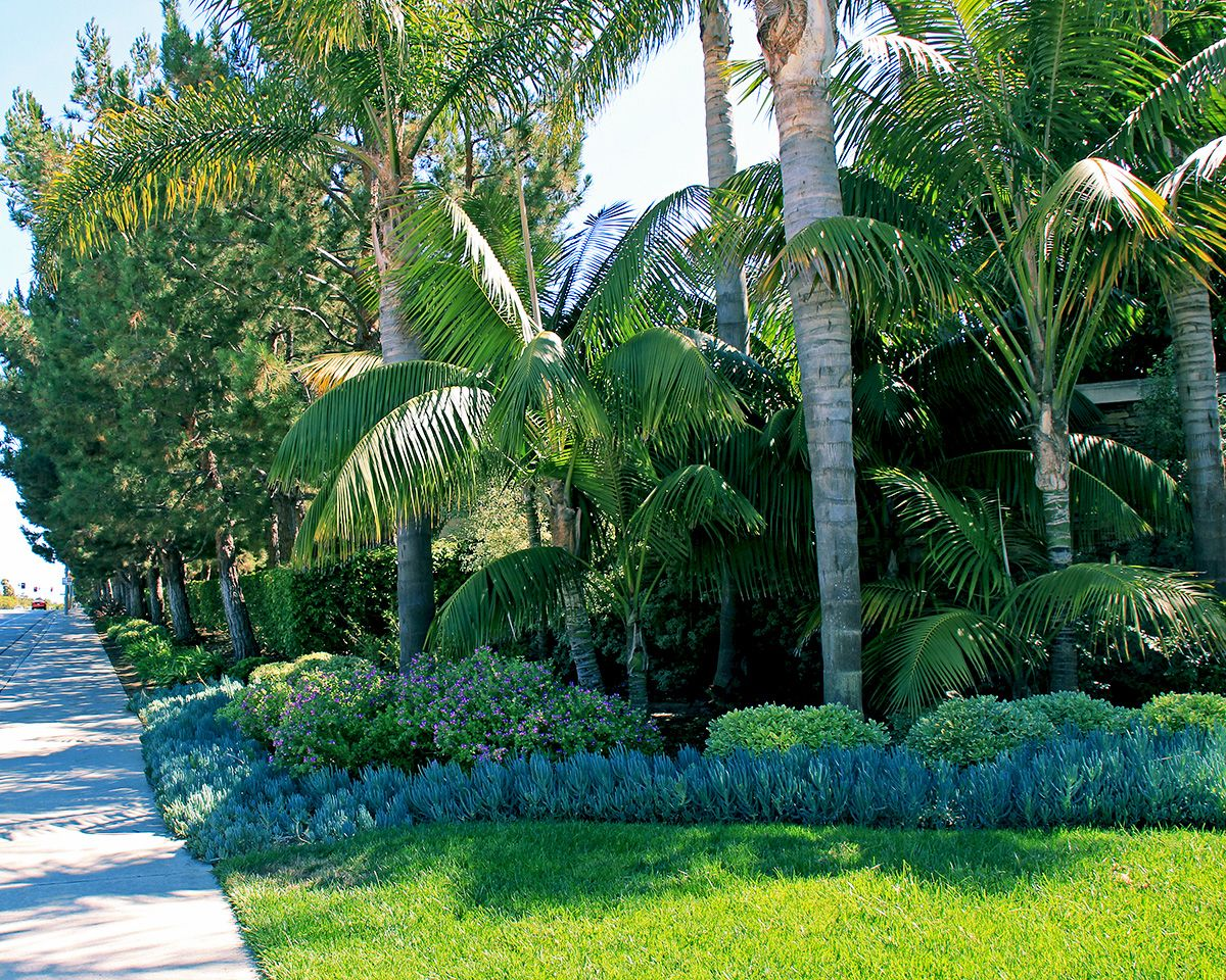 Tropical - Roger's Gardens Landscaping   Tropical landscaping
