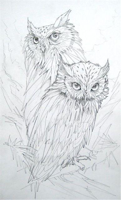 Coloring pages owls coloring for adults kleuren voor volwassenen