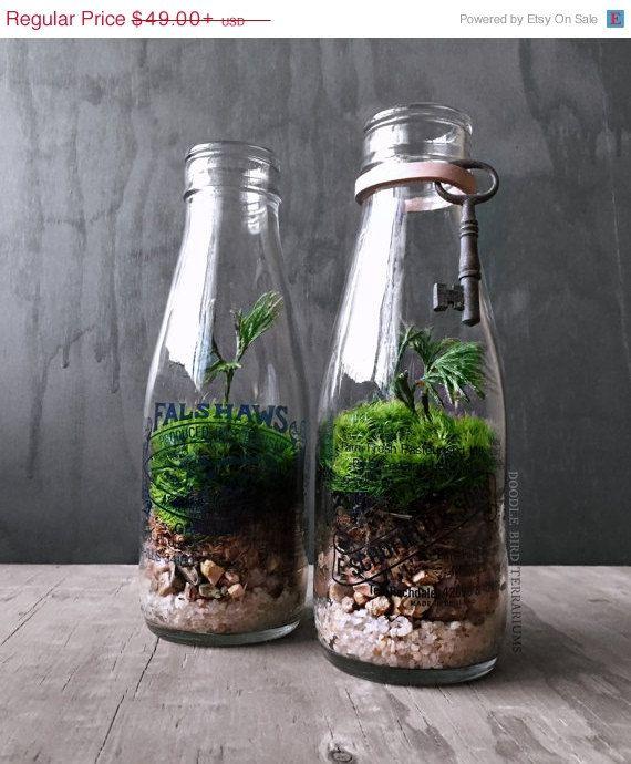Sale Milk Bottle Terrarium Live Plants Vintage By Doodlebirdie