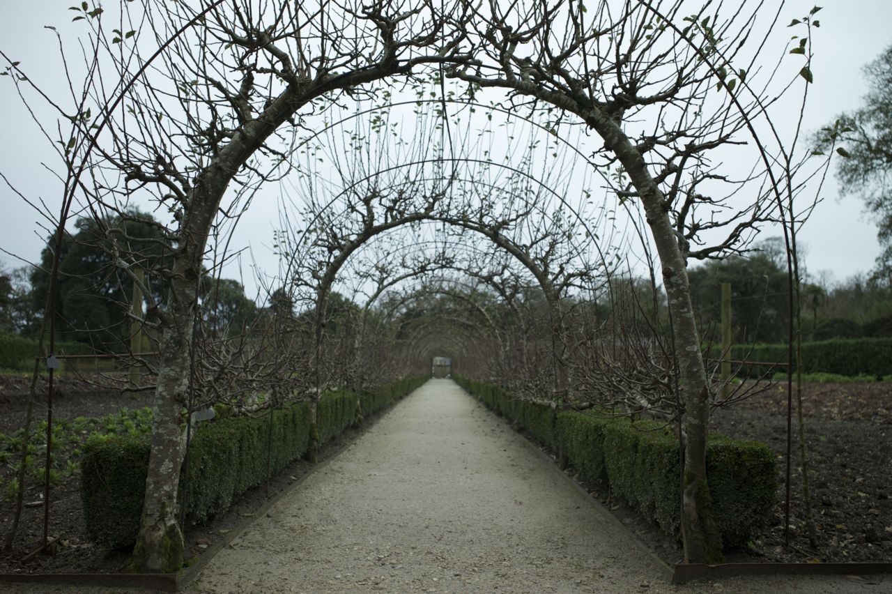 at The Lost Gardens of Heligan | Loretta Bosence | Gardens ...