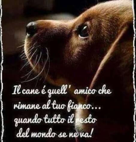 Risultati Immagini Per Frasi Sugli Animali Citazioni Sui Cani