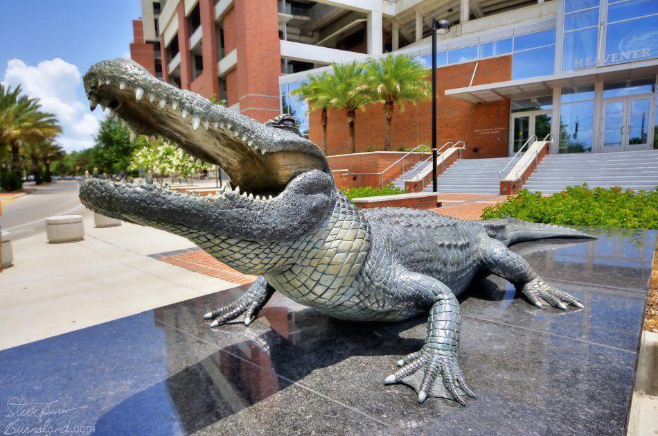 Bull Gator Statue Find Photos FLIPLIFE Online Photo