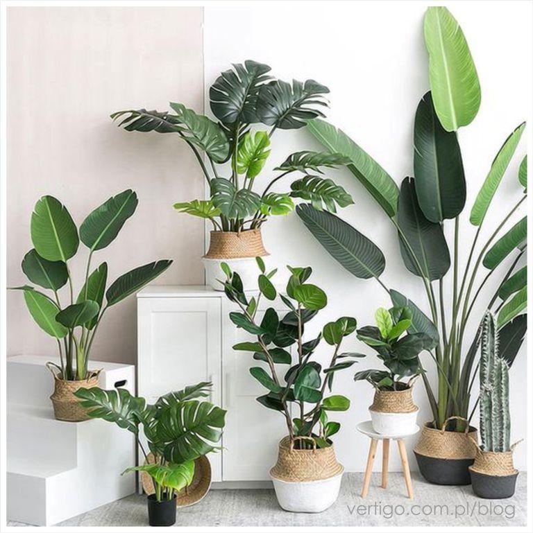 Kwiaty Doniczkowe Z Duzymi Liscmi Plant Decor Indoor House Plants Indoor House Plants Decor