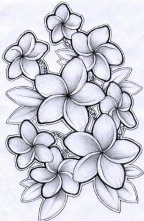 Flowers Art Tattoos Plumeria Tattoo Drawings