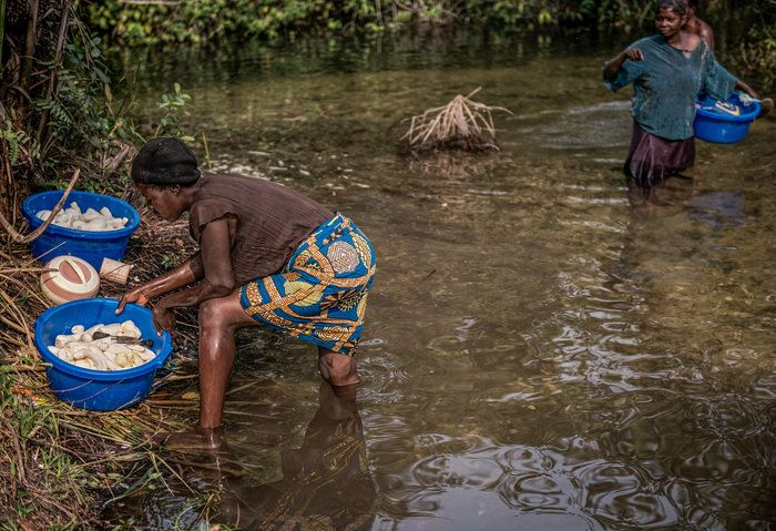 Women make cassava safe to eat when they soak the roots. Over time, water degrades cyanide found in bitter varieties of the plant. But sometimes people here in the DRC are forced to skip the time-consuming step. Militias have been taking over towns and they loot farms for food. They unearth roots of sweet cassava, but leave the bitter ones in the ground. The bitter ones are more poisonous but many don't realize the danger. The risk is higher for people who don't eat enough protein.