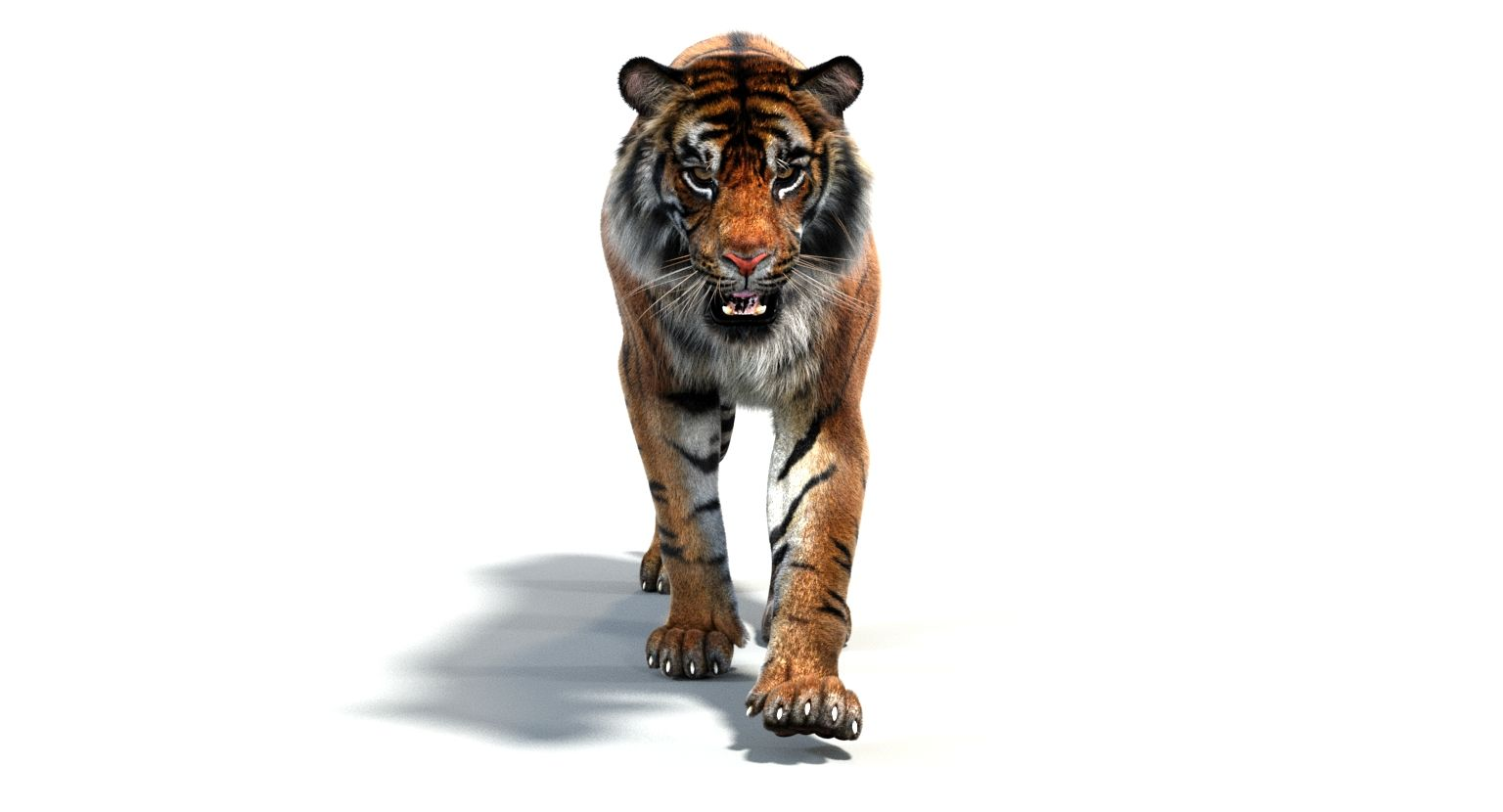 Tiger Walk Cycle Animation By Promax3d Tiger Walking Tiger 3d Model