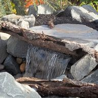 Using Logs to make your Water Feature Pop!#/887156/using-logs-to-make-your-water-feature-pop?&_suid=136250161831205627246610534405