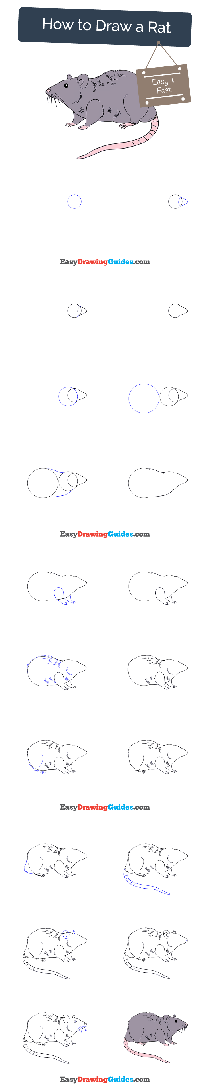How To Draw A Rat Drawing Ideas Drawing Tutorials For