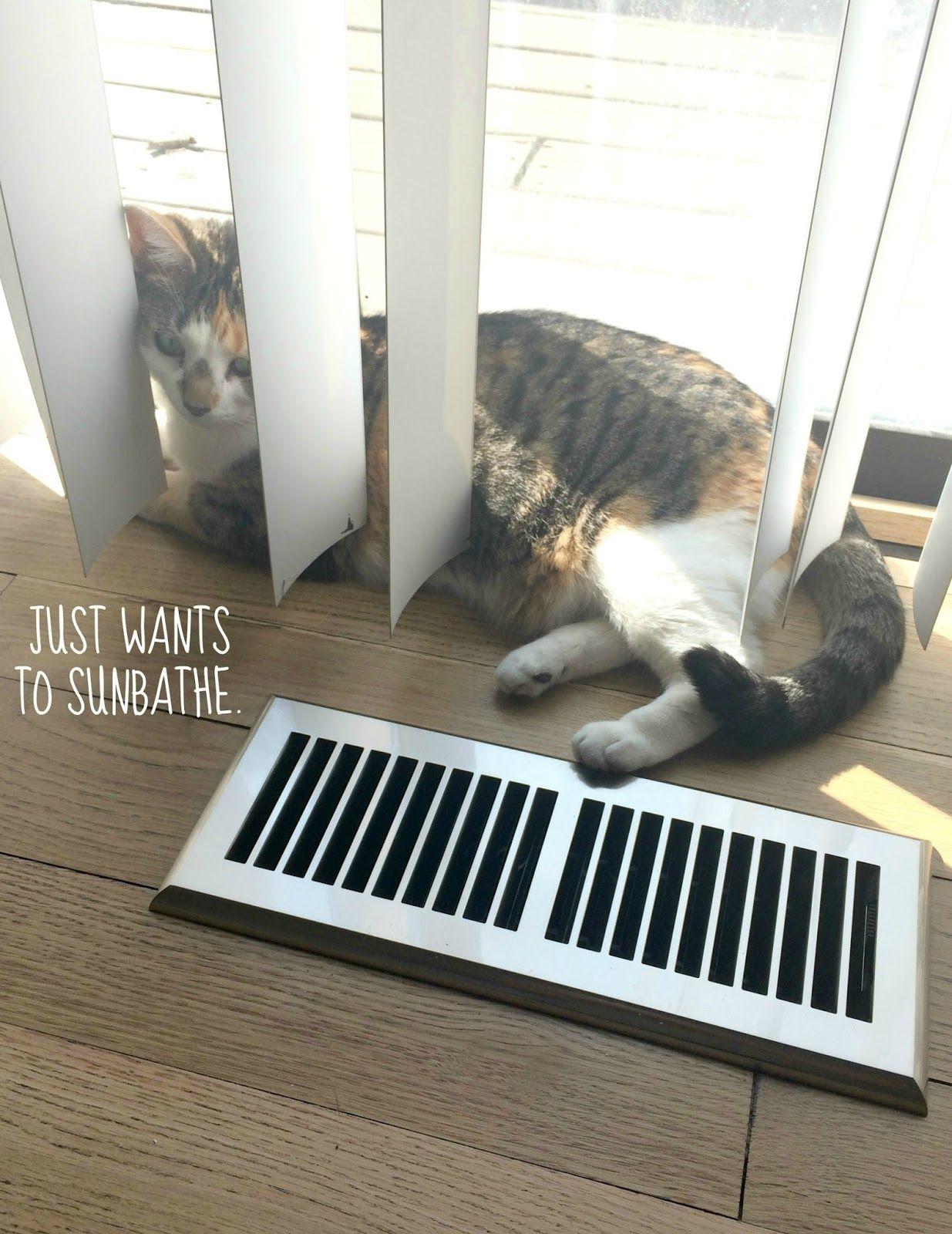 Girl Just Wanna Have Sun