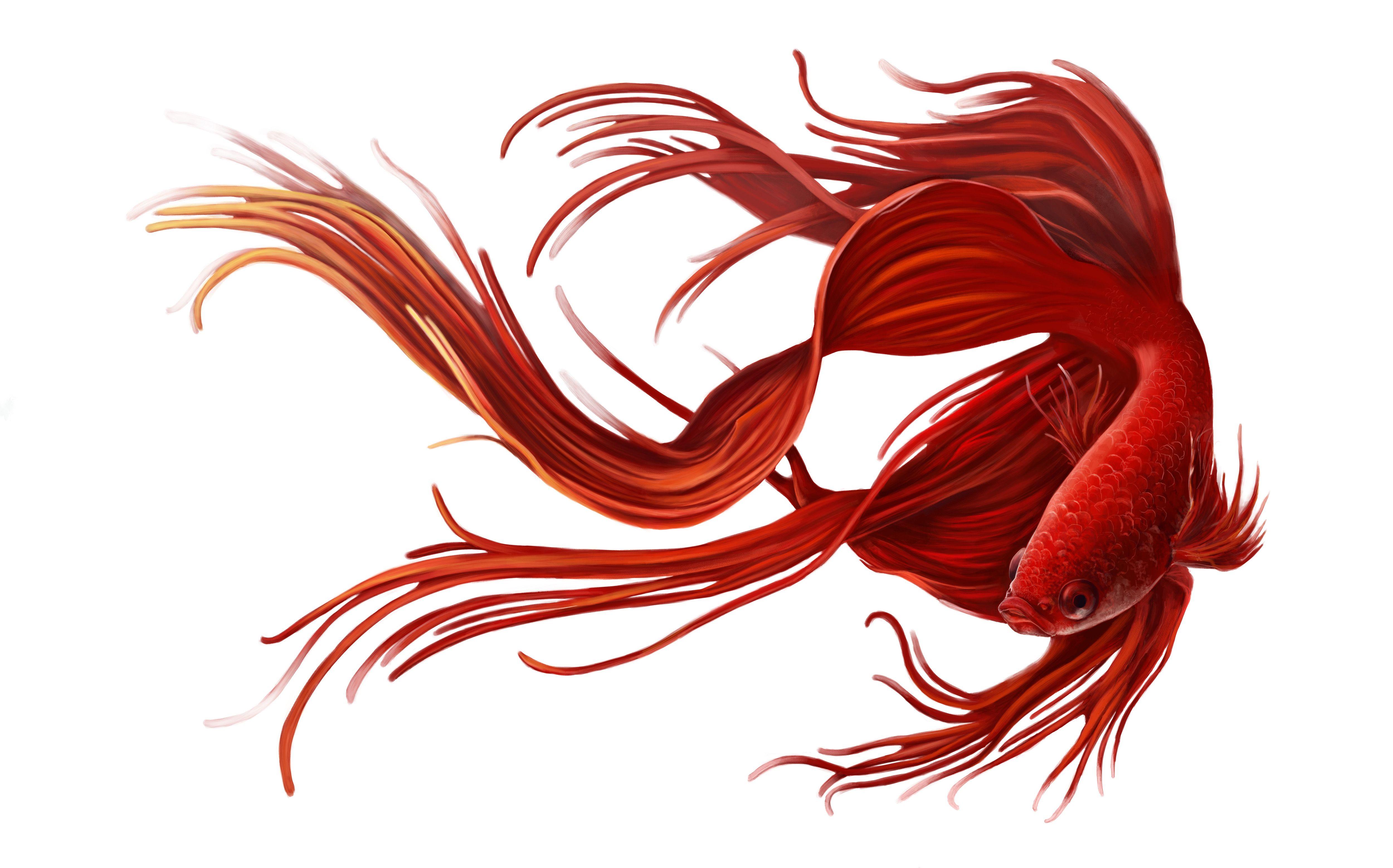 Siemese Fighting Fish https://www.behance.net/stokristina