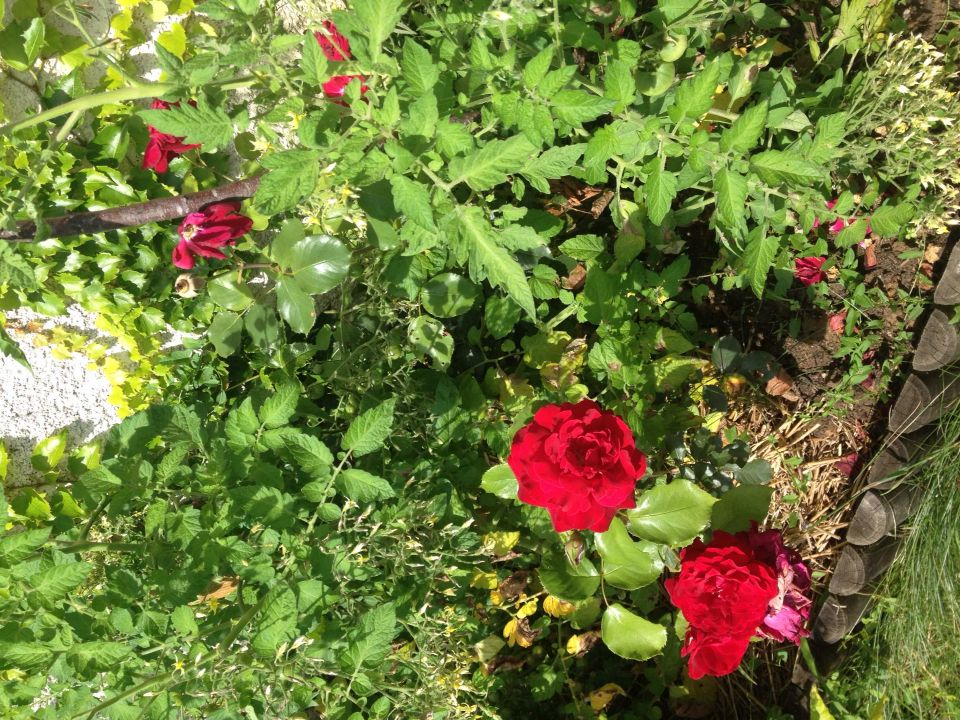 Contrast of red and green outside my house. Ellen Wallinger