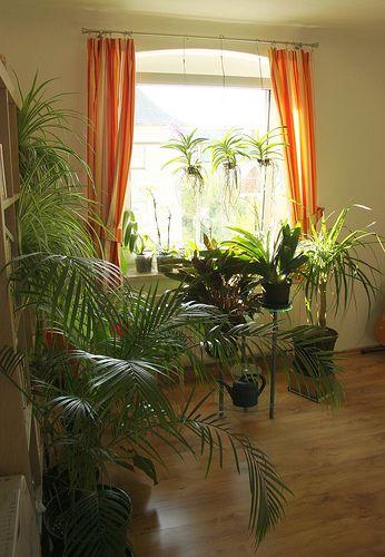 Pflanzen Wohnzimmer インドアグリーン Pinterest Plants - pflanzen für wohnzimmer