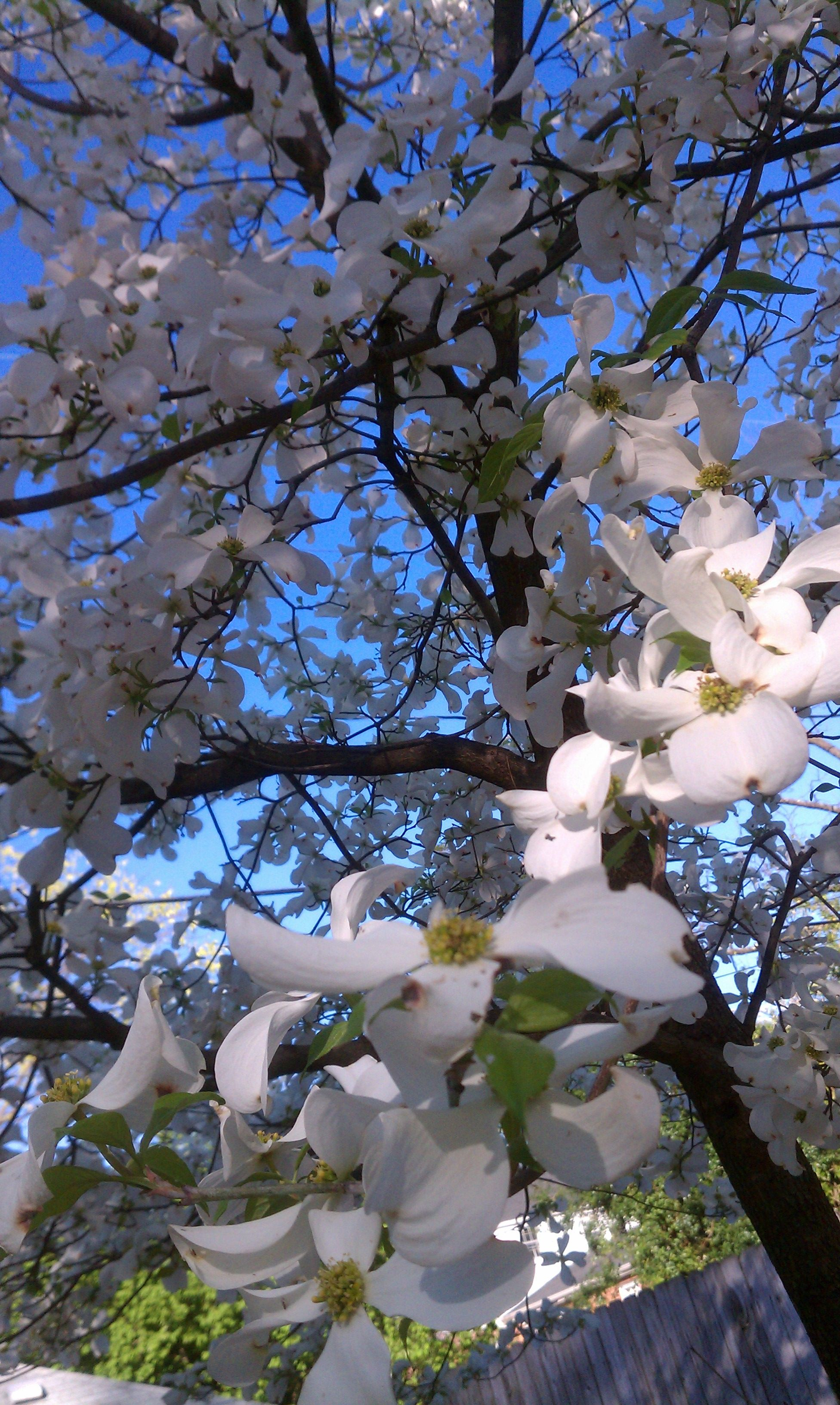 Spring Flowers In Richmond Va Hopefully Well Be Seeing Sunny