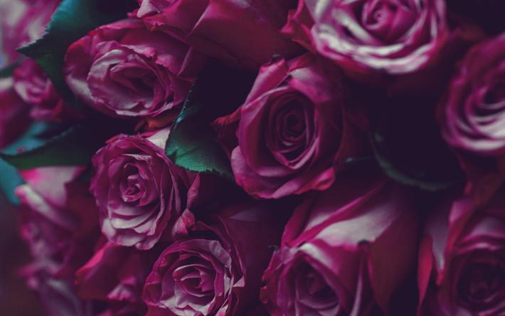 Herunterladen Hintergrundbild Lila Rosen Schönen Bouquet Von Rosen