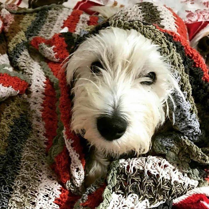 Repost Highrise Petcare Good Morning Walter Dogsofchicago