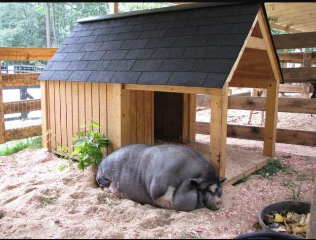 house for a pig
