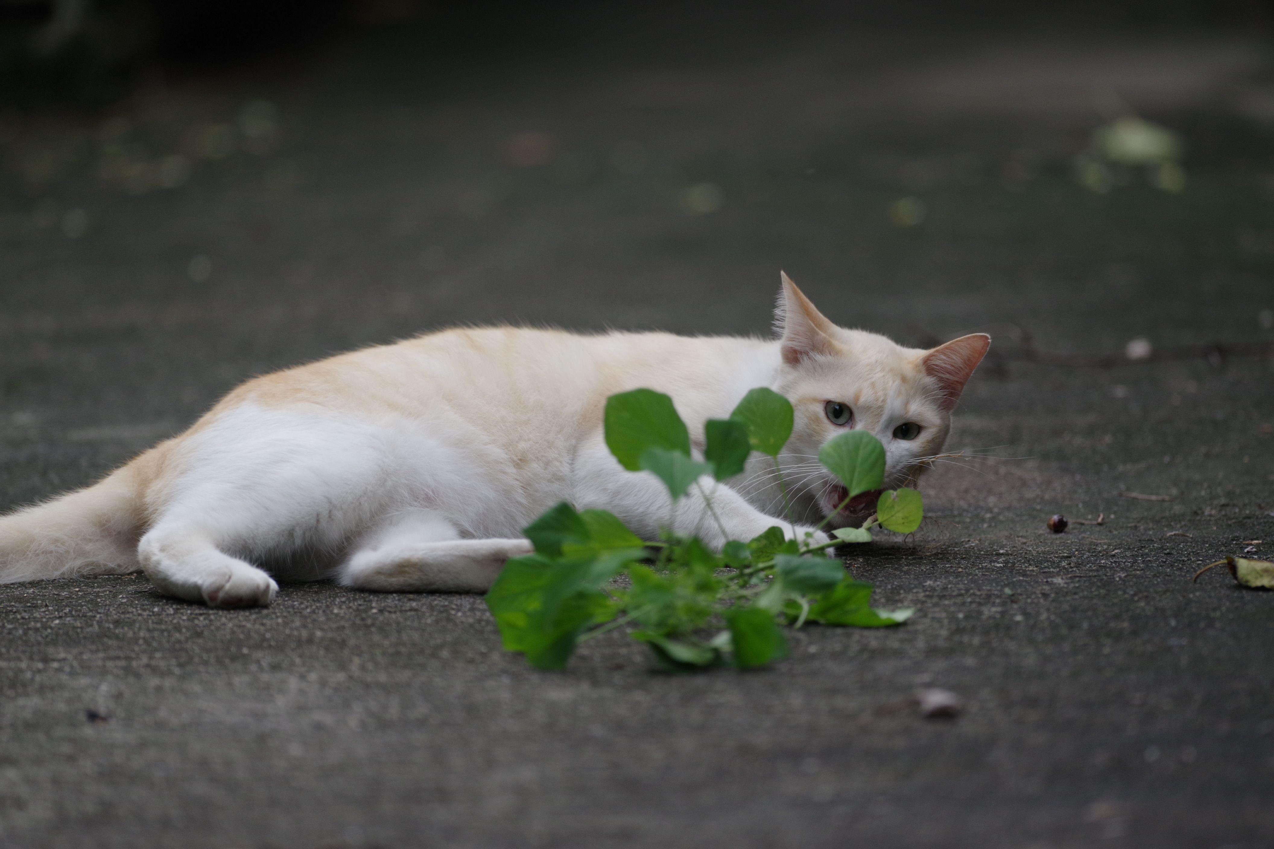 โดยเฉพาะหญ าแมวท เข าบอกว าก ญชาแมว ผมชอบมากๆเวลาเขาเร ยกผมข นบ านเข าก ใช อ นน แหละ ล อผมข นบ าน