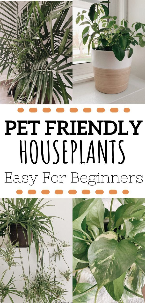 Best Pet Friendly Houseplants -