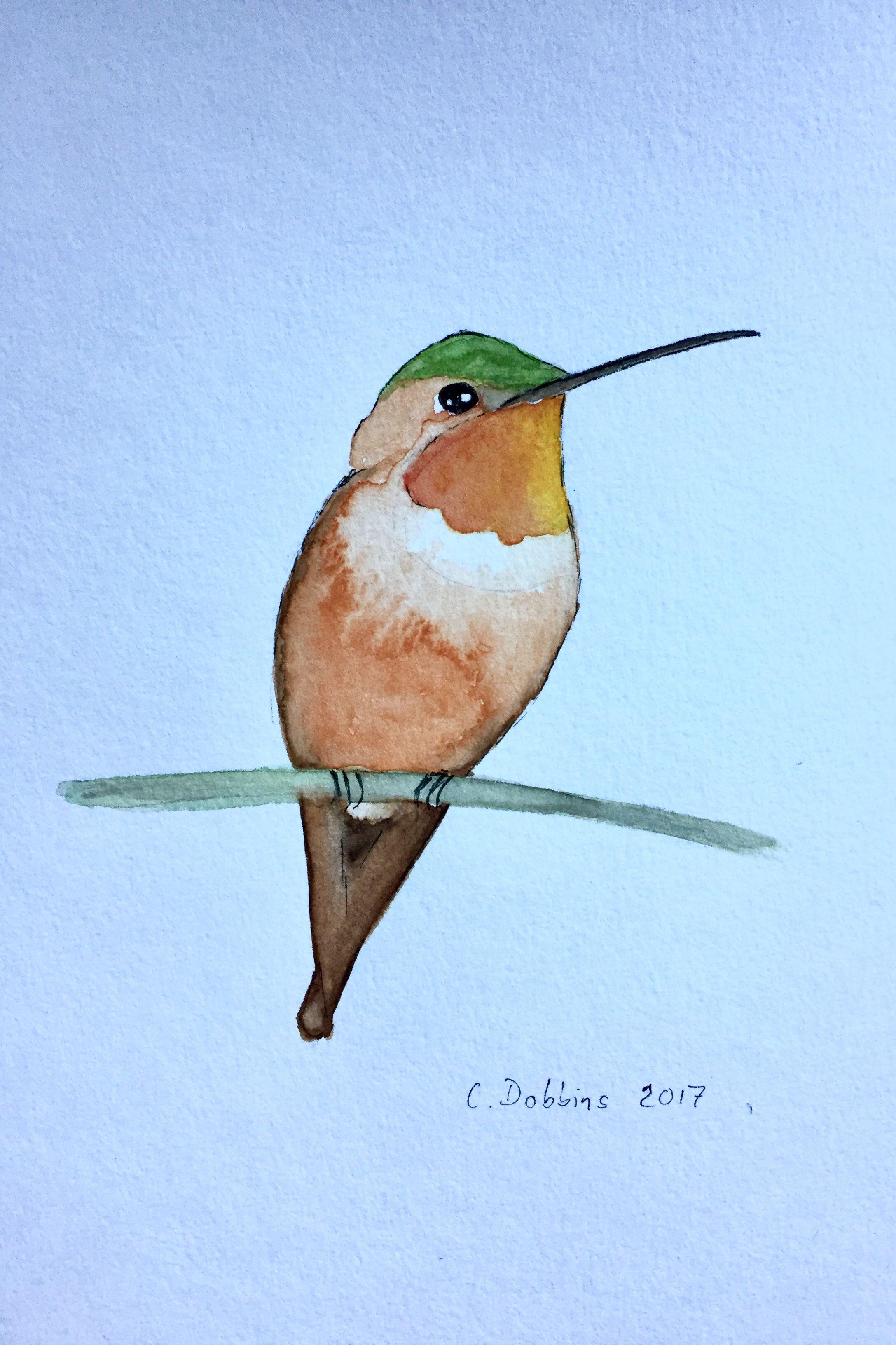Rufous hummingbird (Selasphorus rufus) | Collections | Pinterest