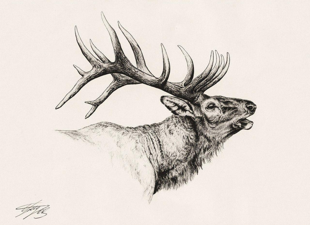 Pin by Natalie Martin on Zentangle | Pinterest | Elk ...
