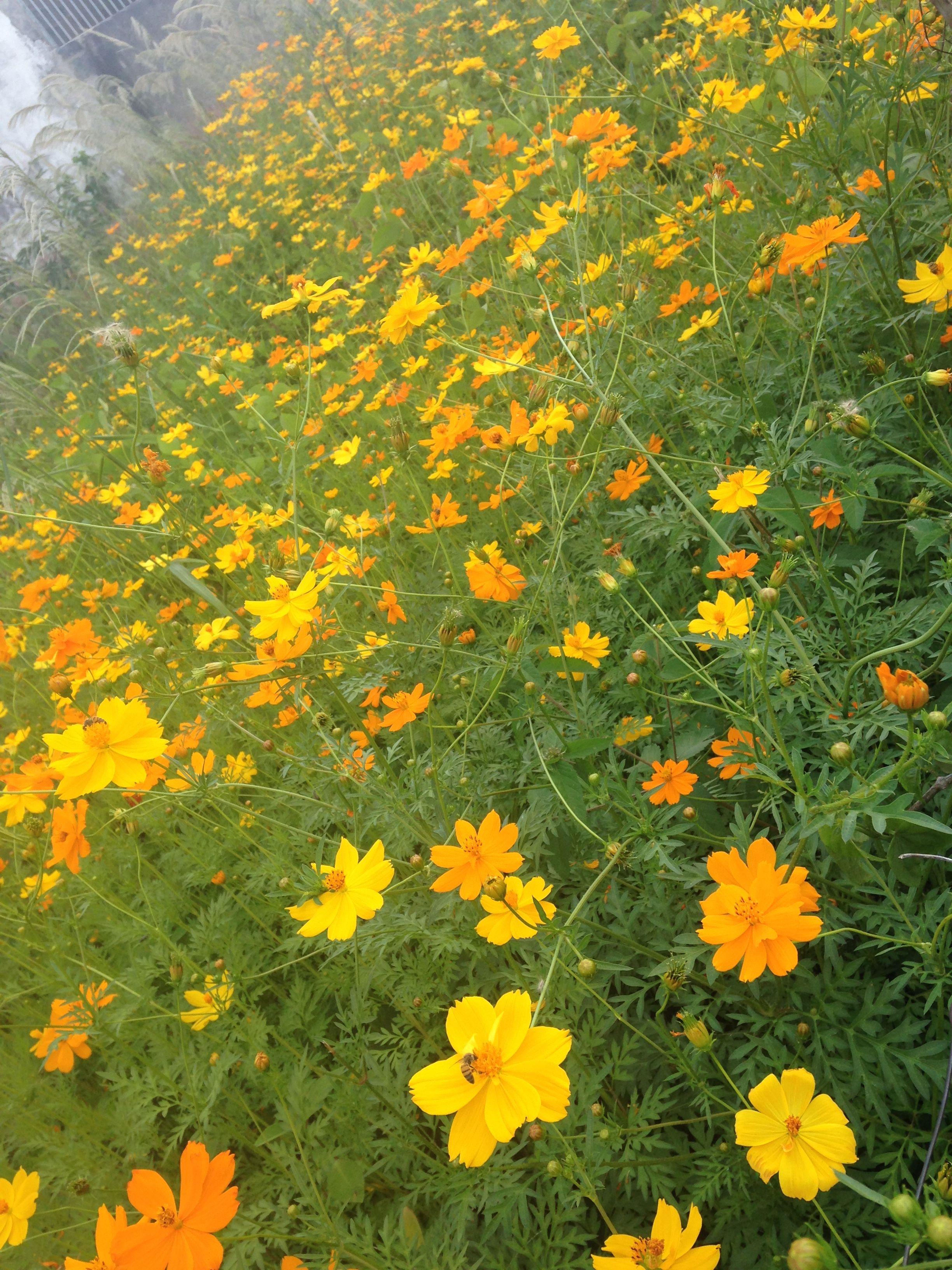 Flower Nature Yellow Garden Tumblr F L O W E R S