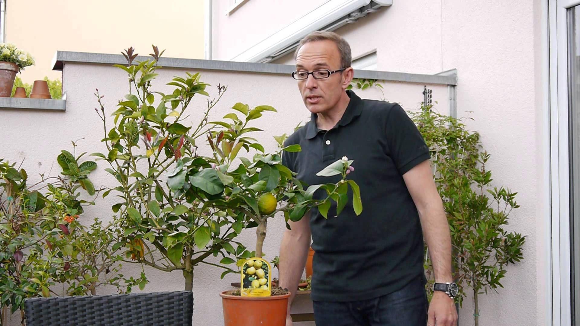 Wichtige Tipps zur Pflege von Zitruspflanzen