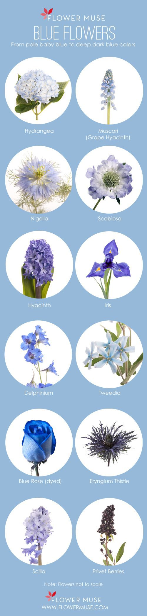 Our favorite blue flowers see more on flower muse blog httpwww looking for some blue color inspiration we share our favorite blue flowers from hydrangea to nigella these blooms are perfect for any wedding or event izmirmasajfo Gallery