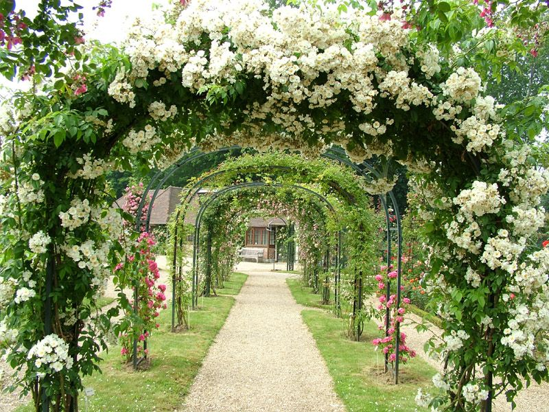 I want flowery arches like this when I get to have my own ...