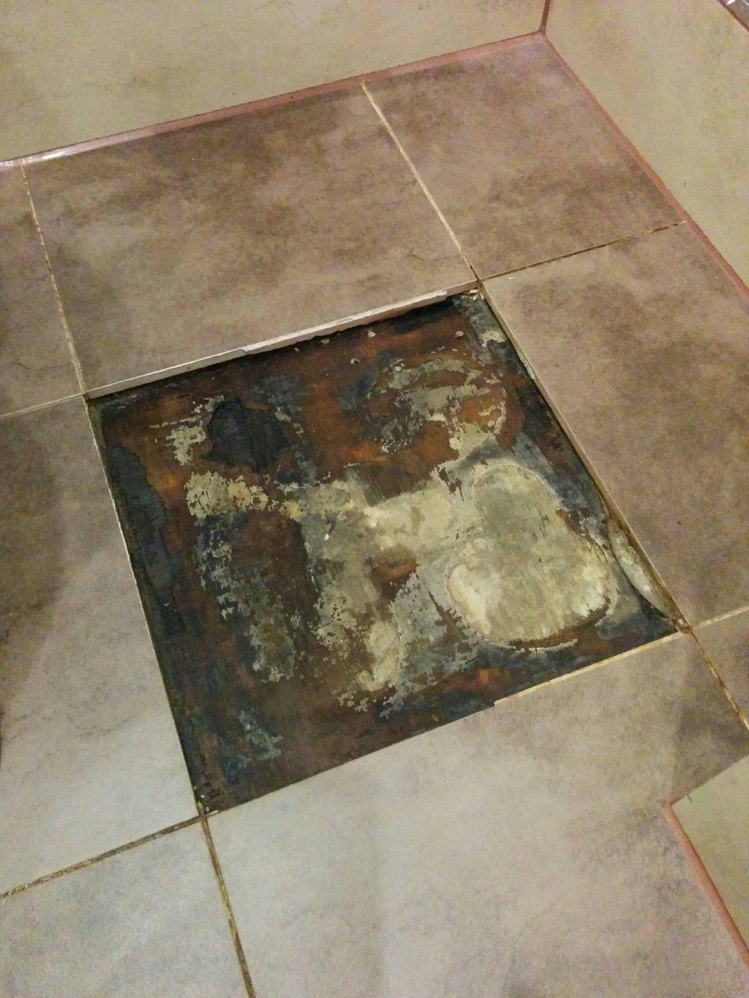 Water Leaking From Under Bathtub Mold In Bathroom Bathroom Floor Tiles Bathroom Wall Tile