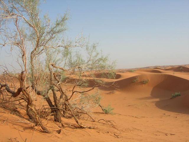 الزلفي الربيع منتديات مكشات Desert Travel Country Roads Trip