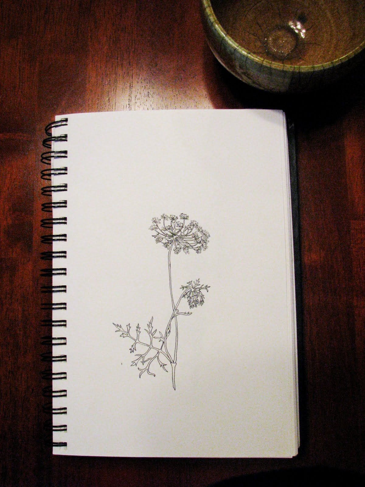 Once Again I Love Queen Anne S Lace Ink Art Lace Flower