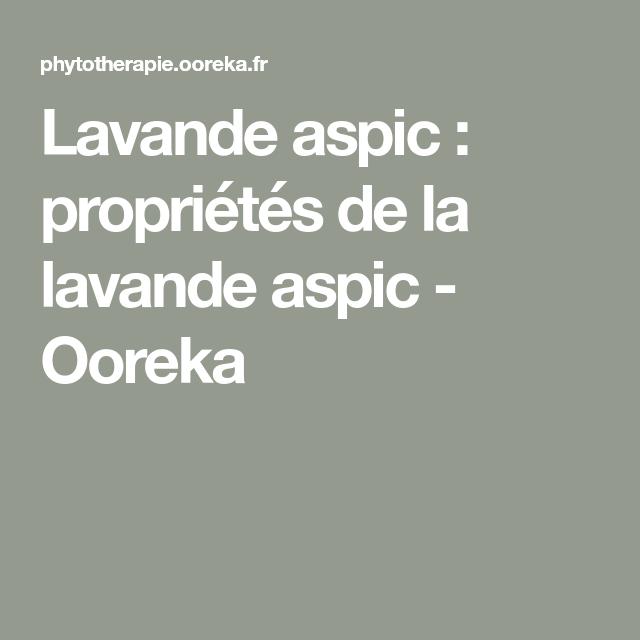 Aspic de lavande: propriétés de l'aspic de lavande – Ooreka   – Recettes huiles