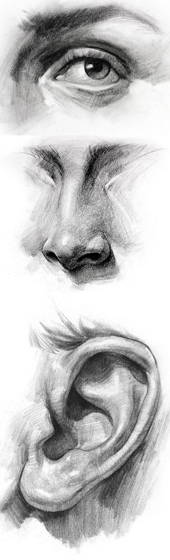 how to draw a nose front view