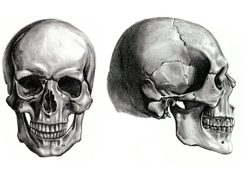 17 Best ideas about Skull Anatomy on Pinterest | Skeleton anatomy ...