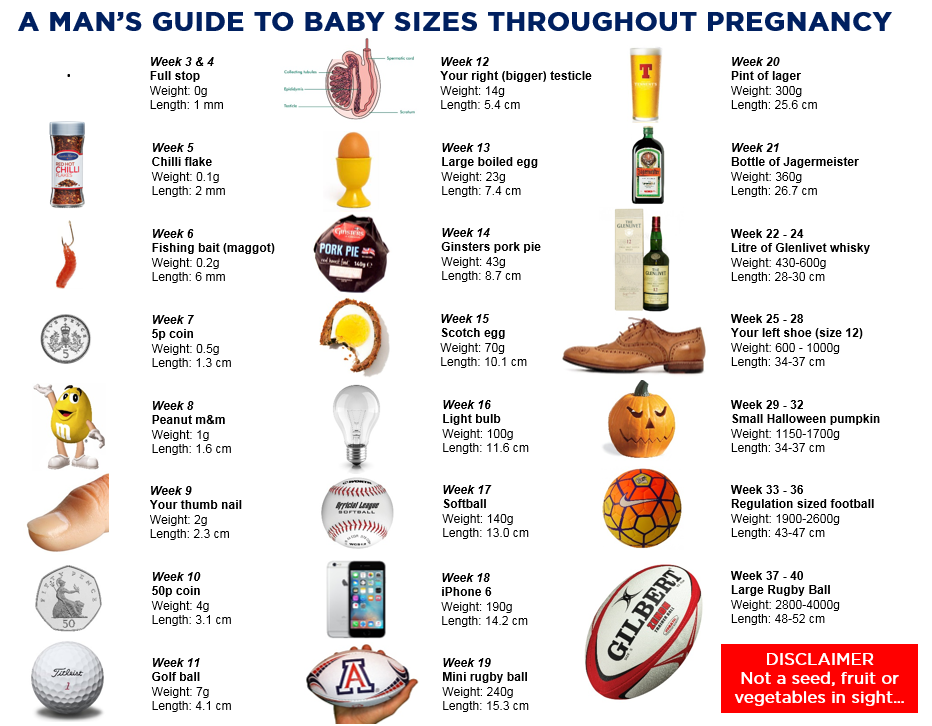 A Man's Guide to baby growth during pregnancy - Copyright owned by ...