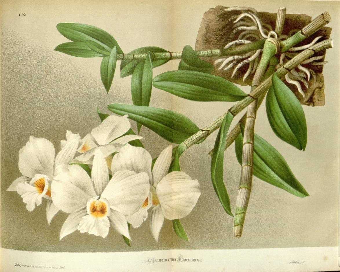 v.21 (1874) L'Illustration horticole Biodiversity