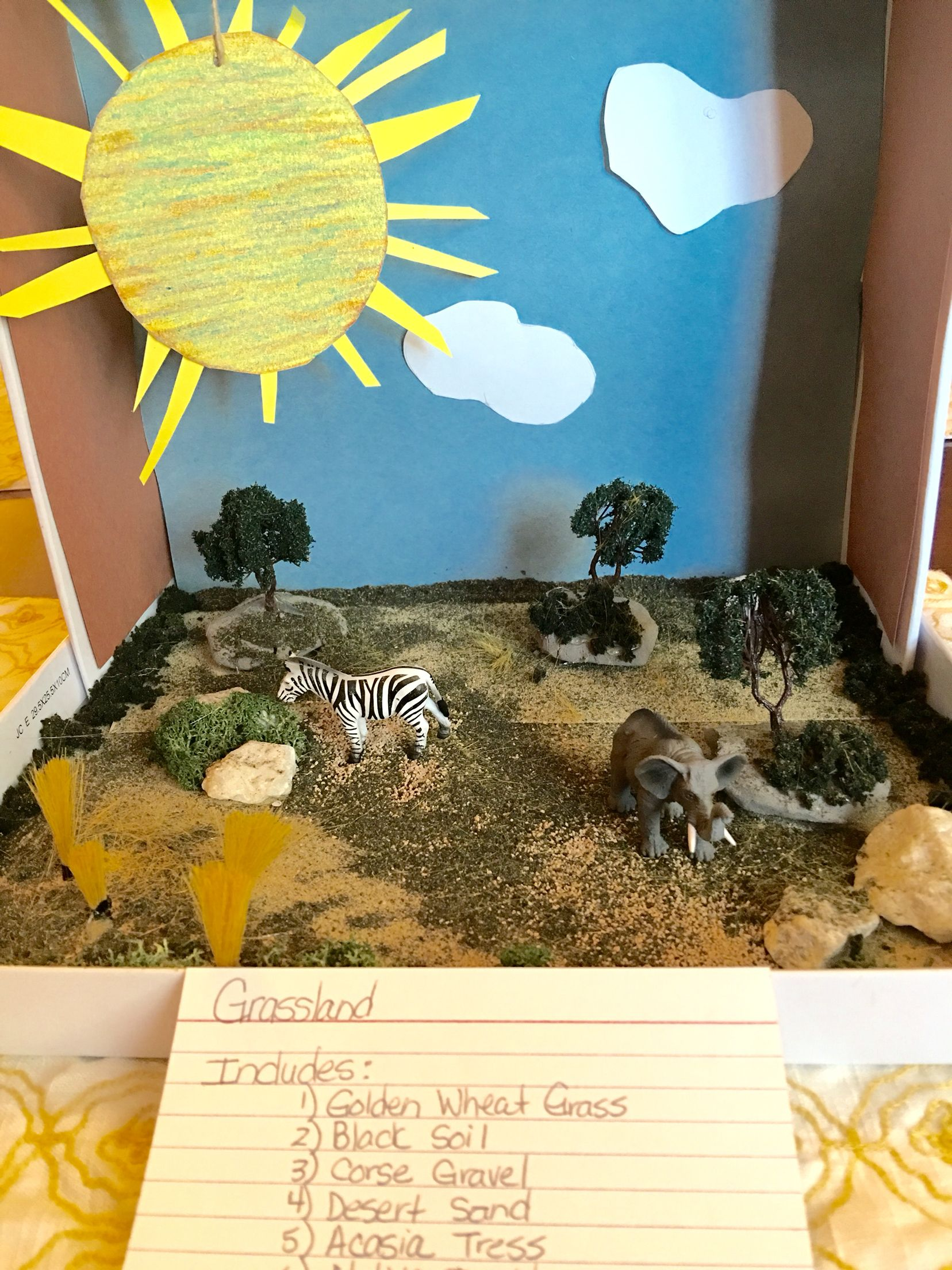 Biome Grassland Project 4th Grade With Images