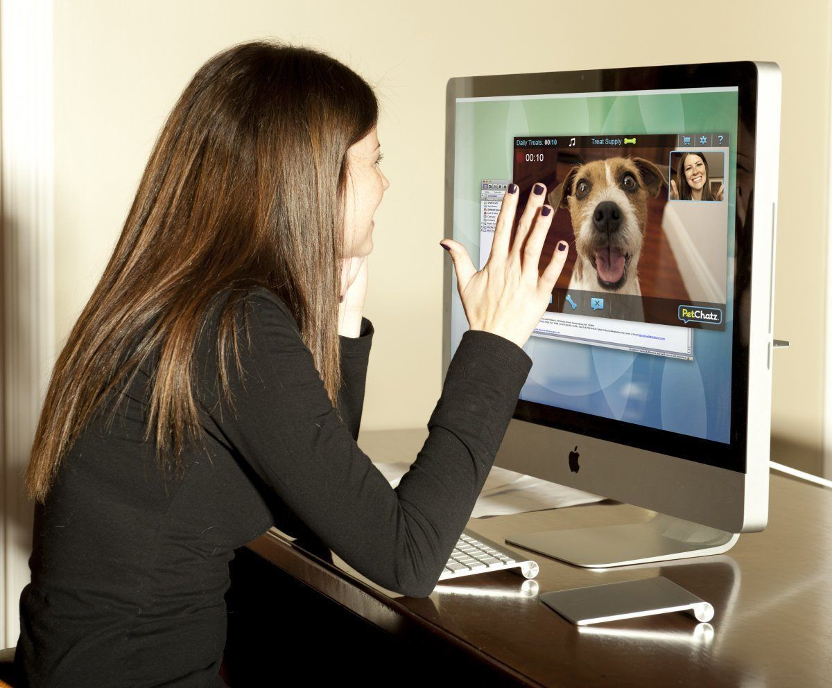 Pet Camera Monitoring System The Best Dog Camera Review 2018 Pet Camera Discount Pet Supplies Pets