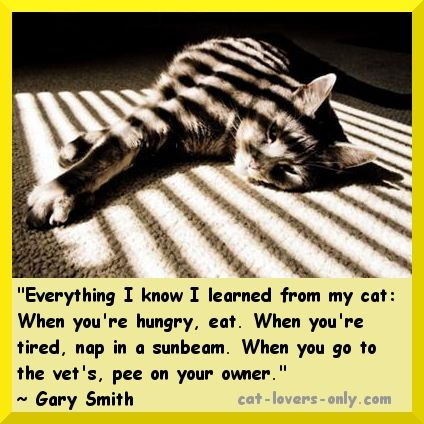 Funny Quotes About Cat Lovers : Funny Cat Quotes: Amusing Quips About Kitties Tabby cats, Cats and ...