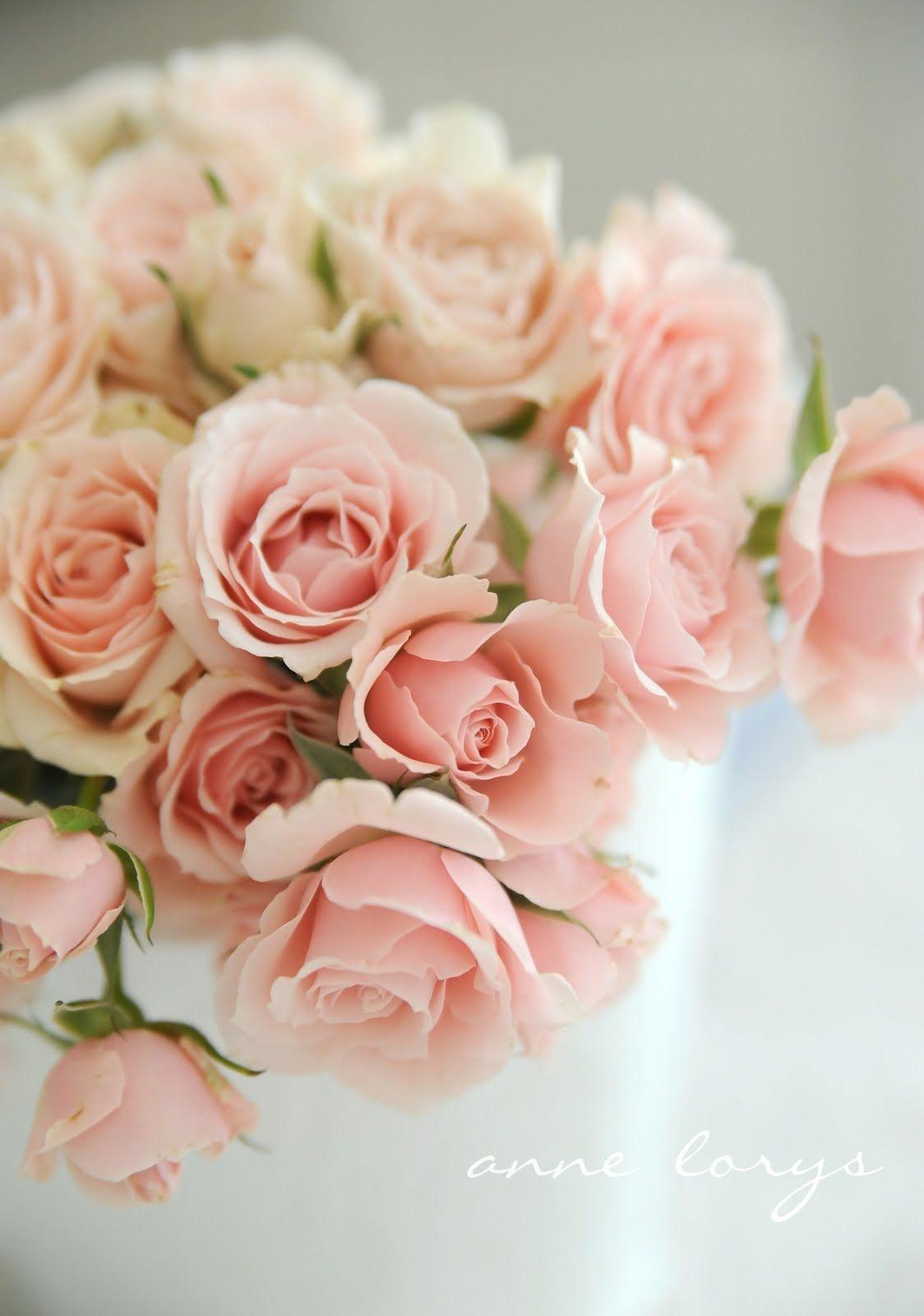 The Prettiest Pink Roses Via Ann Lorys My Favorite Color