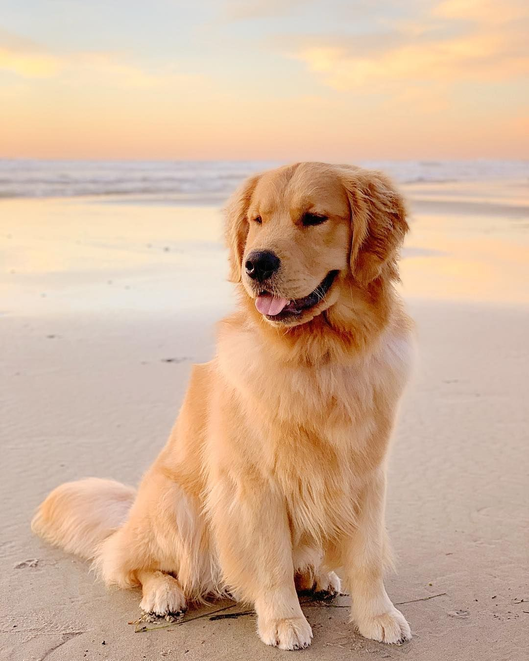 Kyler The Golden On Instagram Dreaming Of Sunset Walks On The
