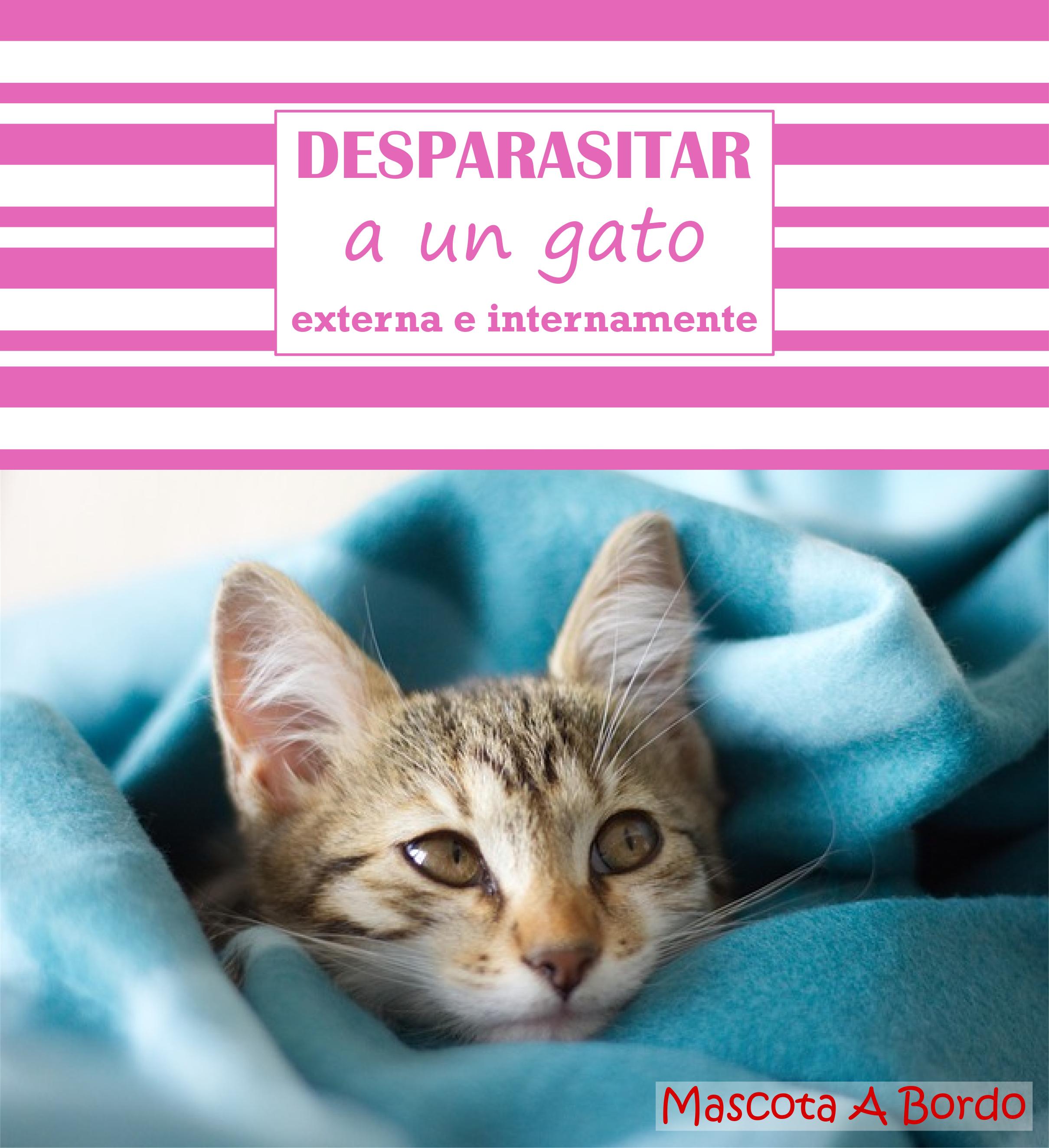 72 Ideas De Gatos Gatos Mascotas Gatitos Recién Nacidos