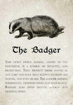 e3695355 Hufflepuff: The Badger. Pottermore Sorting: Sorting Hat Analysis and Meta