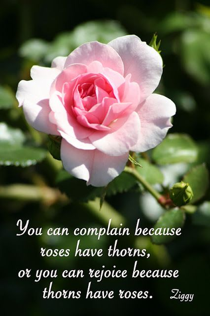 Love Garden Roses: Lily-Fashion: Quote Garden